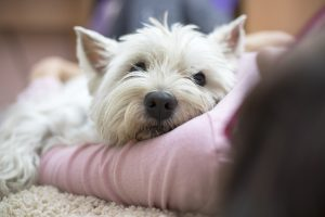 Scapa de mirosul neplacut animalelor de companie